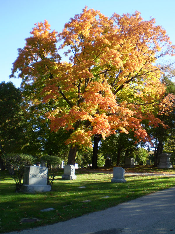 Oakwood Downtown Cemetery Fall Tree